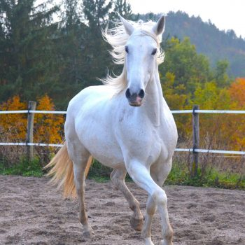 cheval-equiconscience-anne-sophie-heckel